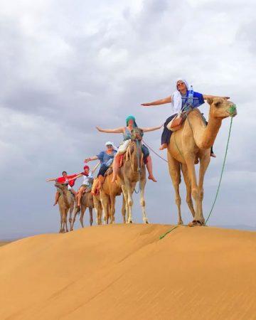 Camello trekking